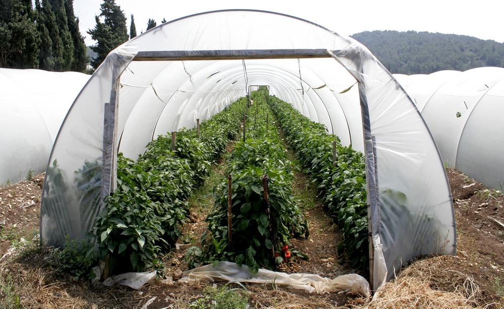 High tunnel gardening, shutterstock_3950587 (1)