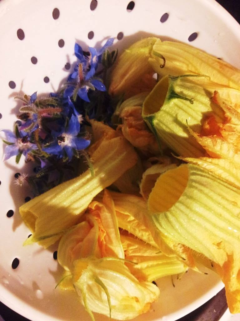EDIBLE FLOWERS - SQUASH BLOSSOMS and Recipe. #EdibleFlowers #SquashBlossomPhoto #CanYouEatSquashBlossoms #SquashBlossomRecipe #CanYouEatSquashFlowers