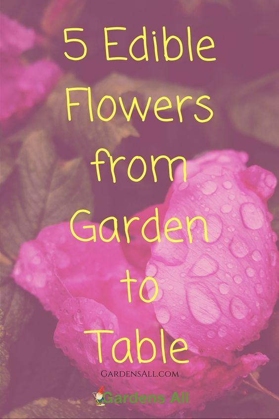Flowers served with food, colors a meal with an exotic, beautiful and vibrant presentation. But flowers can do so much more than just look pretty. Many of them are edible and contain nourishing and even healing properties.