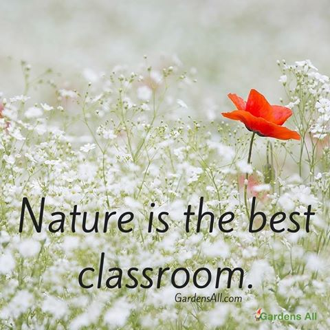 Nature quote, nature meme, nature is the best classroom