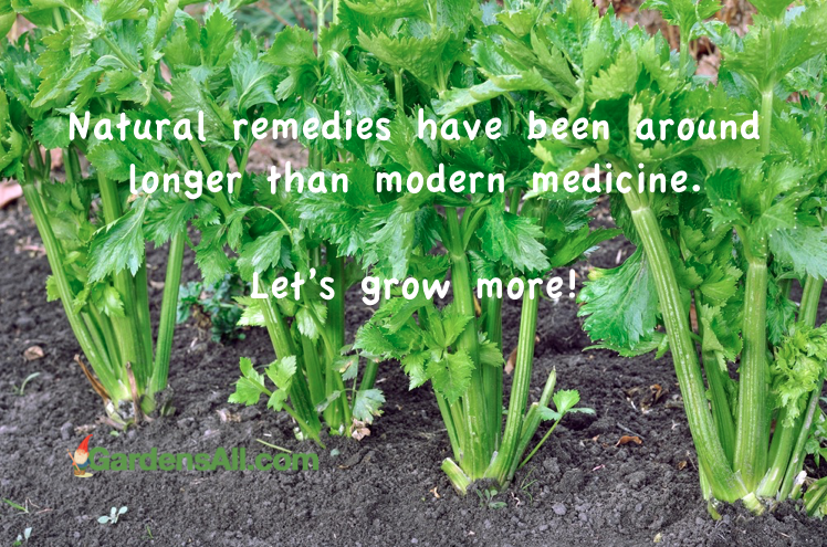 Natural remedies have been around longer than modern medicine. Let's grow more health!