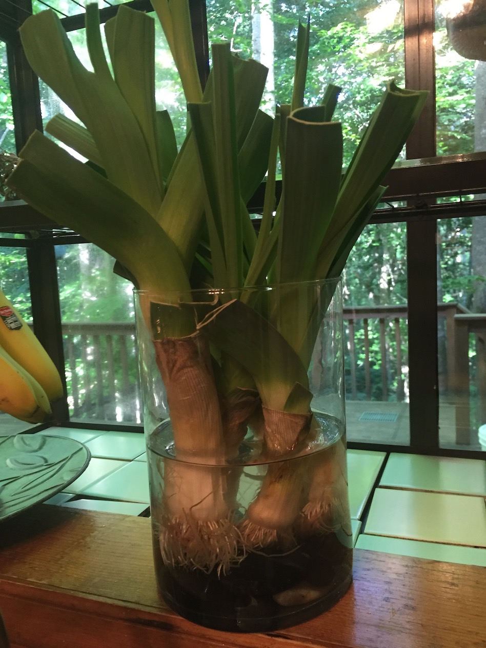 Growing Leeks and Lettuce Indoors in Days