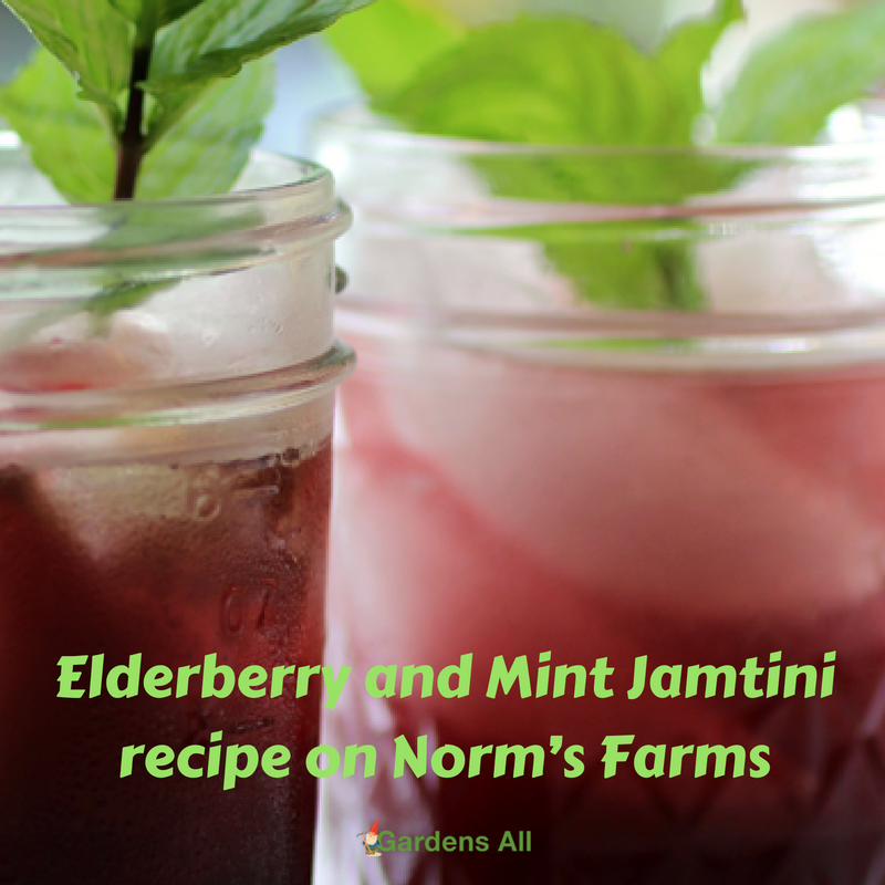 Elderberry and Mint Jamtini recipe on Norm's Farms