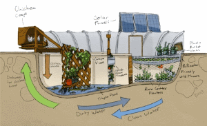Turn old swimming pool into a aquaponic Garden of Eden.