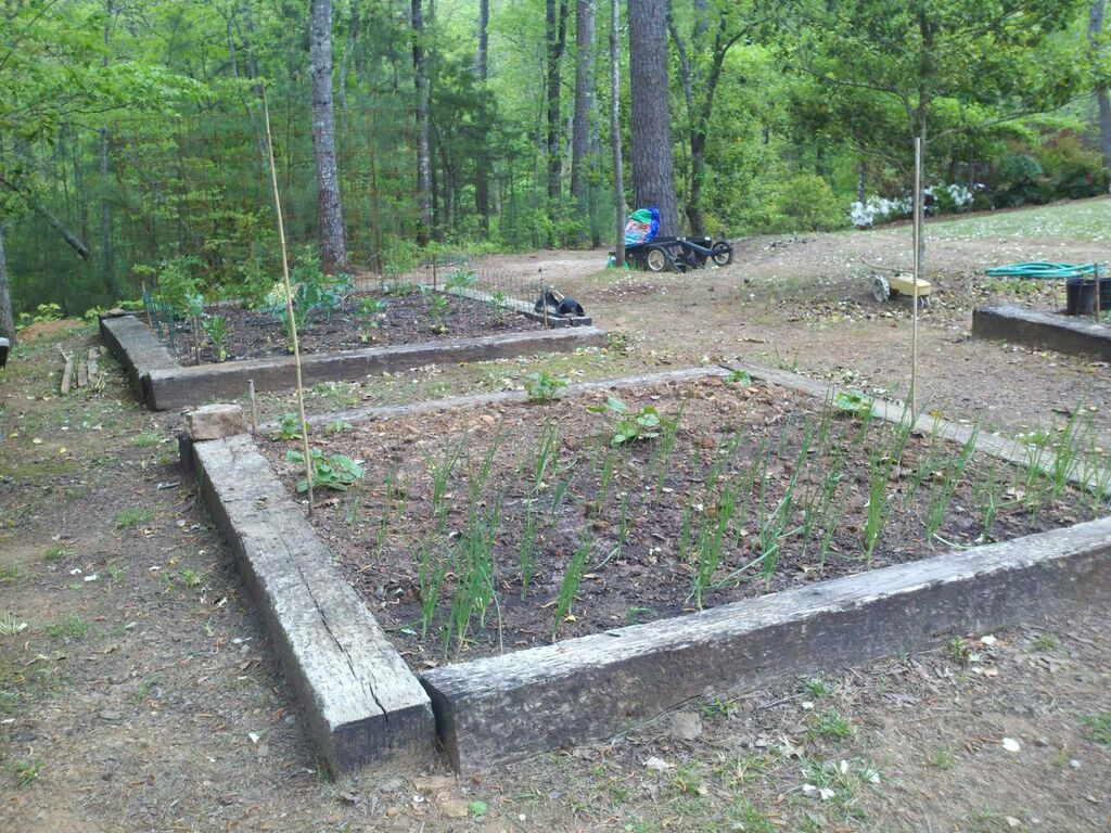 We built four, 8'x8' raised beds and planted our first crop of lettuce, tomatoes, spinach, yellow squash and zucchini.
