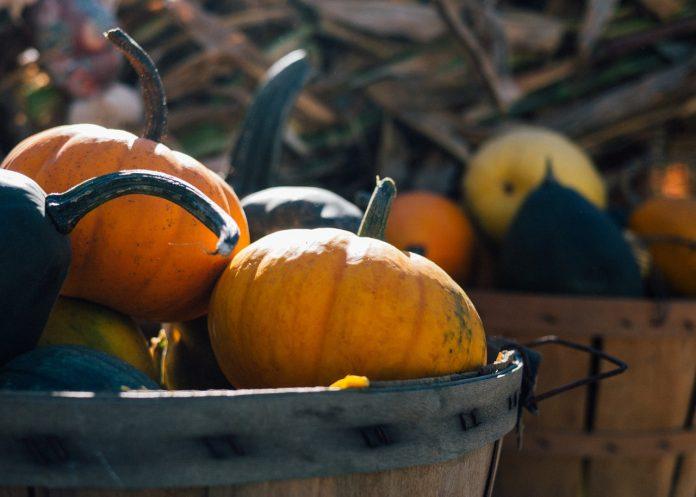 Fall Harvest, Winter Gardennig