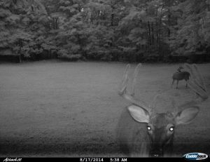 We love our trail cams! We're using the Cuddle Back Trail Cam and have caught some interesting wildlife pictures.