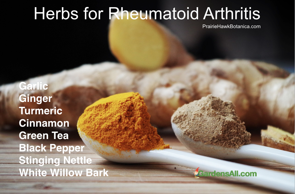Beneficial Herbs for Arthritis