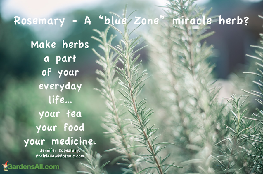 rosemary-for-health-and-longevity