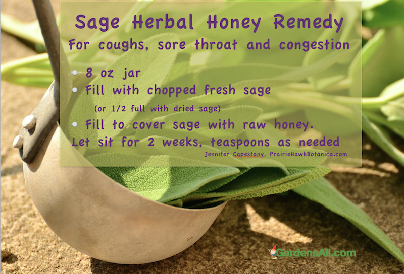 sage-honey-remedy-for-sore-throat