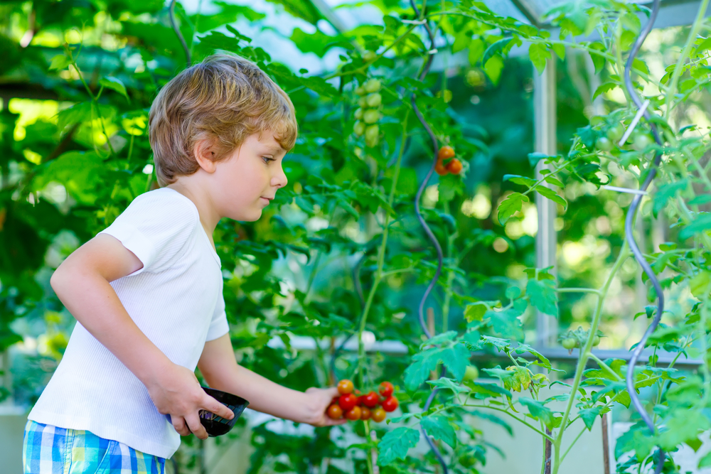 garden curriculum, kids in the garden, family gardening,