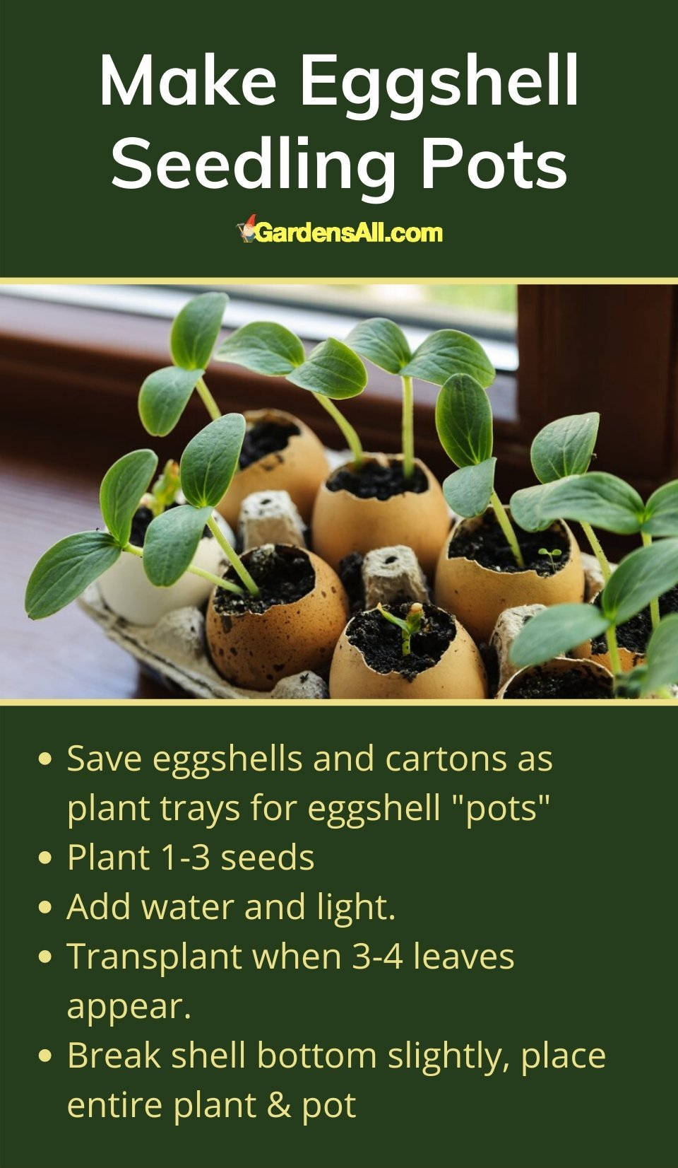 """Eggshell """"pots"""" for seedlings is a fun, free and efficient garden hack for sowing seeds. Yes, it's not as efficient as a seedling tray, however it's free and we love how it recycles both the eggshells into garden nutrients and comes with a self-contained plant tray as well. #IndoorGarden #Planters #GardenIdeas #GardenTips #GardenTools #ContainerGardening #Gardening"""
