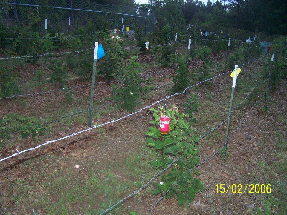 Hays-Berry-Farms_Hummingbird-feeder