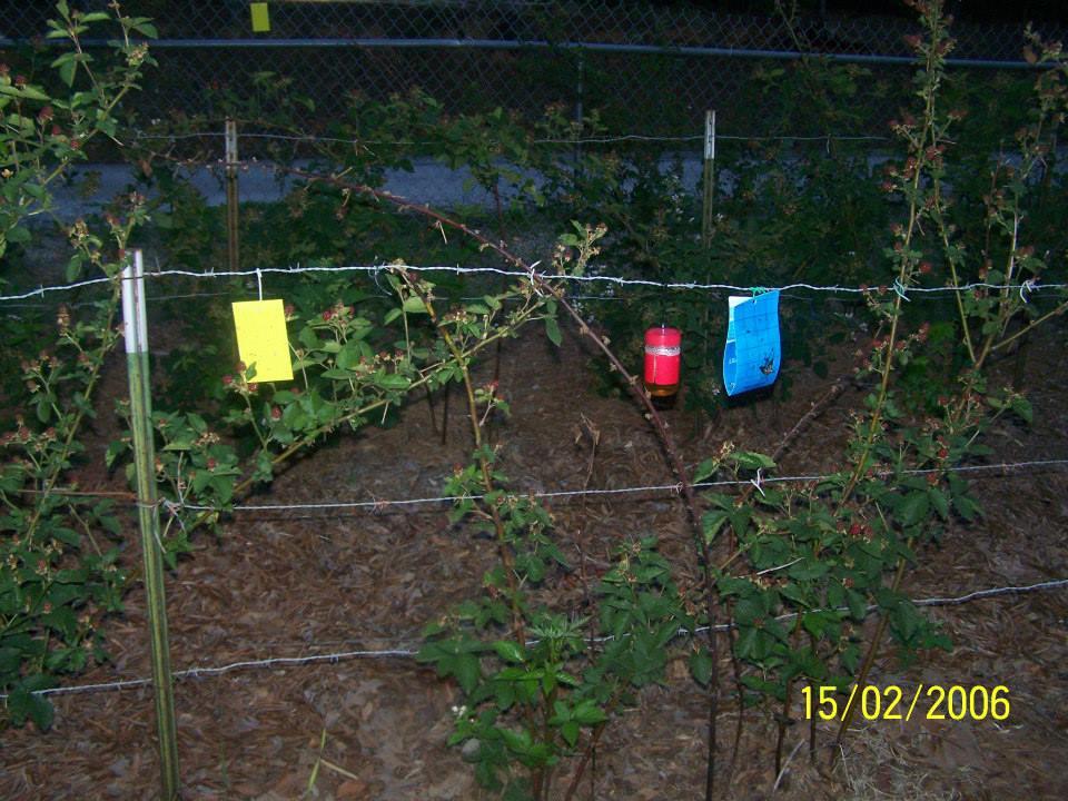 Hays-Berry-Farms_pest-control-placement