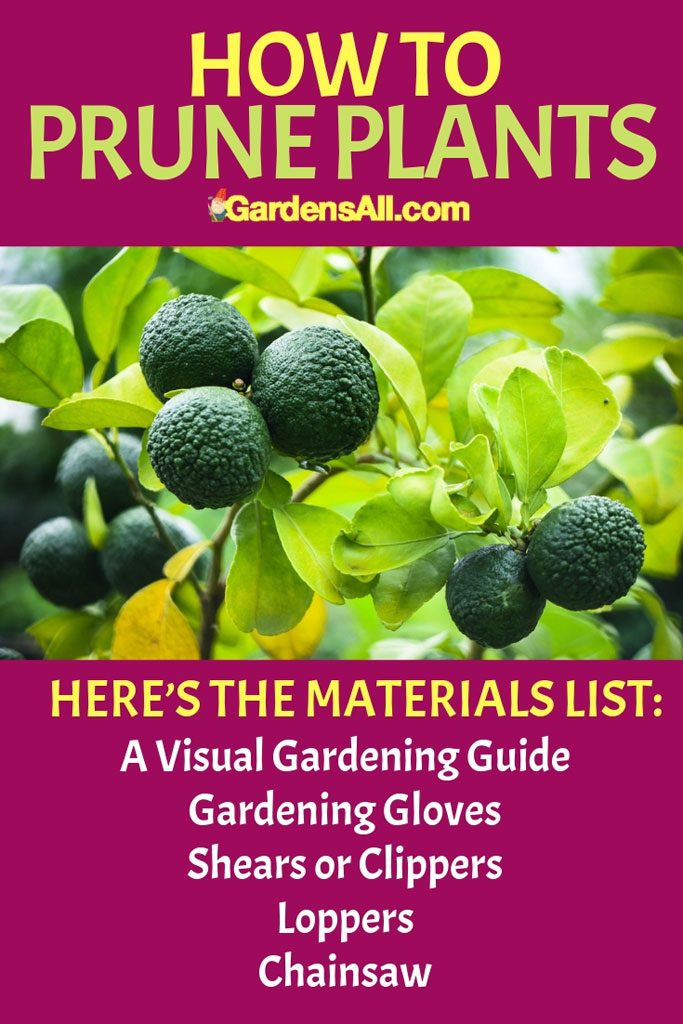 Here's the materials list they recommend to set you up right. A Visual Gardening Guide, Gardening Gloves, Shears or Clippers, Loppers, Chainsaw #GardenTools #Gardening #KaffirLime #GardenIdeas #HowToGrow #FruitTrees #Pruning