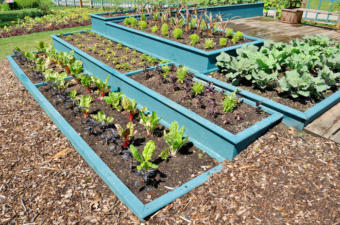 """Painted raised garden beds add designer beauty to the garden, and are especially good for yard gardens in subdivisions that may need to look more """"tame"""".  #PaintedRaisedGardenBeds #RaisedGardenBeds #GardenDesign"""
