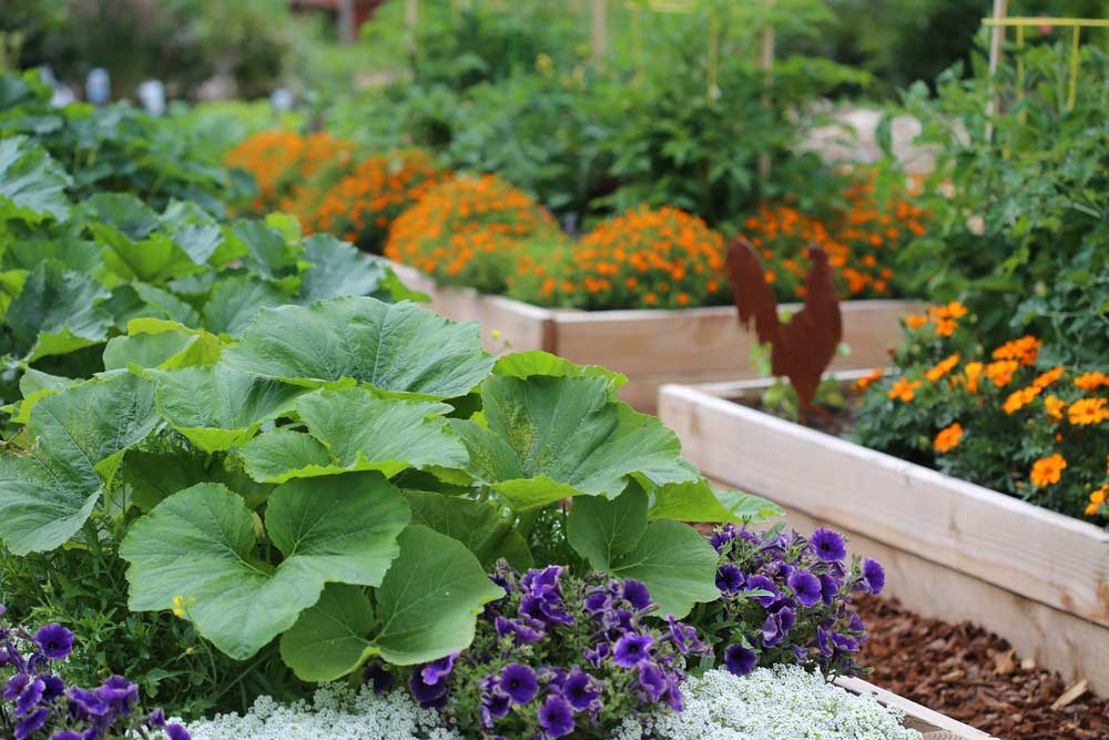 Raised garden beds make for beautiful and practical gardening. #RaisedGardenBedsEdeas #RaisedGarden