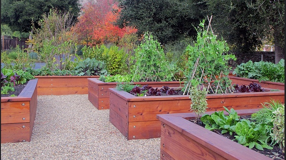 Beautiful stained 2 foot raised garden beds. #RaisedGardenBeds #2footGardenBeds #BeautifulRaisedGardenBeds