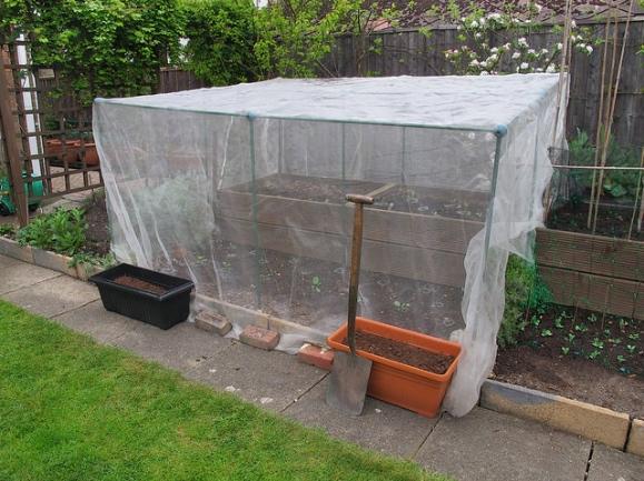 Edible Hedge Fence - GardensAll.com #EdibleLandscape #EdibleHedge #GardensAll