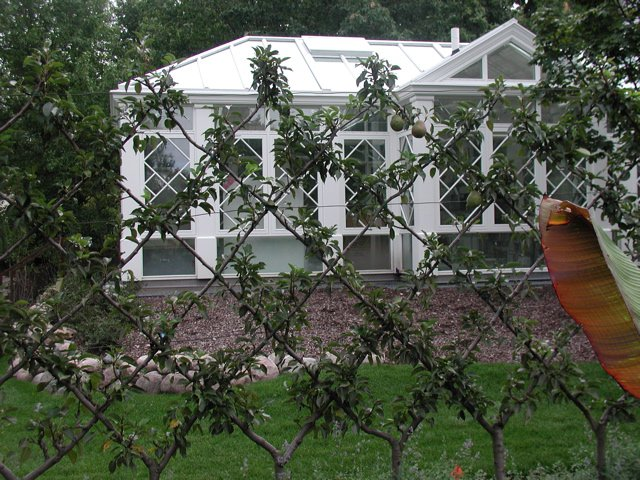 espalier pear tree image