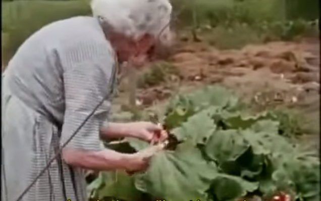 Ruth Stout, No Till Gardening, AKA, Deep Mulch Gardening Method. #LazyGardening #EasyGardening #RuthStout #NoTillGardening #DeepMulchGardening