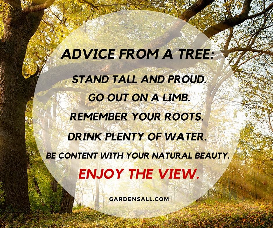 """Advice from a tree:  Stand tall and proud. Go out on a limb. Remember your roots. Drink plenty of water. Be content with your natural beauty. Enjoy the view."" -Anon. #GardenQuotes #Inspirational #Funny #Signs #Wisdom #Short #Flower #Vegetable #Simple #Life #Fairy #Happy #Cute #Family #Sayings #Enchanted #Hilarious #Botanical #Growing #Zen #Rose #Spring #Herb #Aesthetic"
