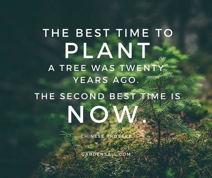 """The best time to plant a tree was twenty years ago. The second best time is now."" -Chinese Proverb #GardenQuotes #Inspirational #Funny #Signs #Wisdom #Short #Flower #Vegetable #Simple #Life #Fairy #Happy #Cute #Family #Sayings #Enchanted #Hilarious #Botanical #Growing #Zen #Rose #Spring #Herb #Aesthetic"