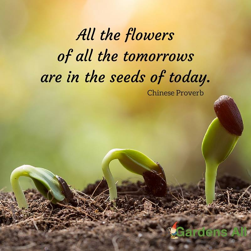"""All the flowers of all the tomorrows are in the seeds of today."" -Chinese Proverb #GardenQuotes #Inspirational #Funny #Signs #Wisdom #Short #Flower #Vegetable #Simple #Life #Fairy #Happy #Cute #Family #Sayings #Enchanted #Hilarious #Botanical #Growing #Zen #Rose #Spring #Herb #Aesthetic"