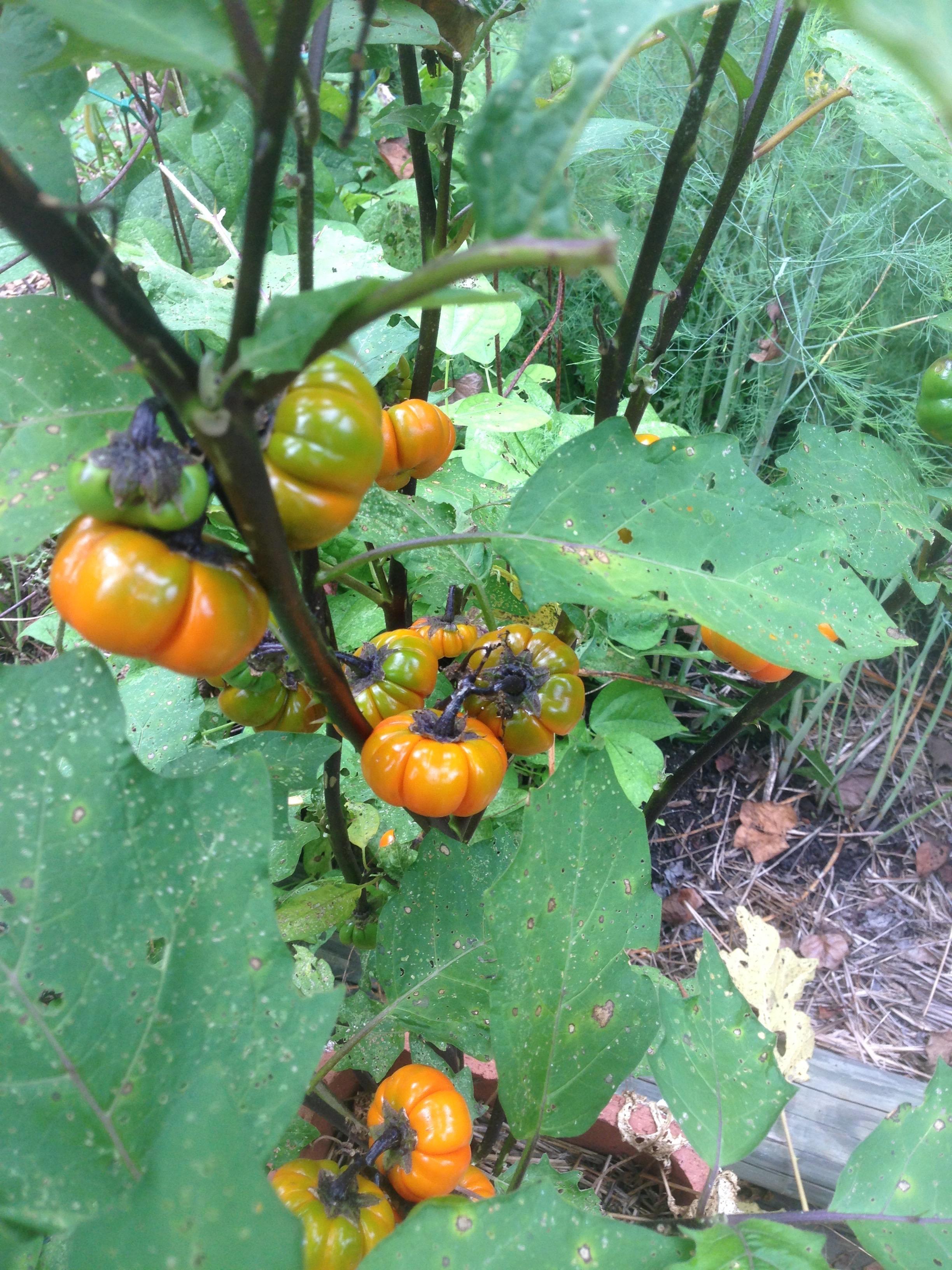 Cooks Thesaurus Exotic Tropical Fruit  foodsubscom