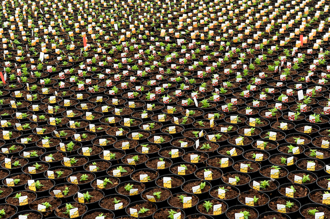 Plant Propagation for Free Plants with the help of Rooting Hormones for Plants. #FreePlants #PlantPropagation #RootingClipping #RootingPlants