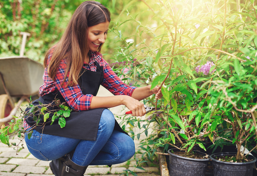 Plant Cuttings and Rooting Hormones. #PlantPropagation #PlantClippings #GrowFreePlants #RootingHormonesForPlants