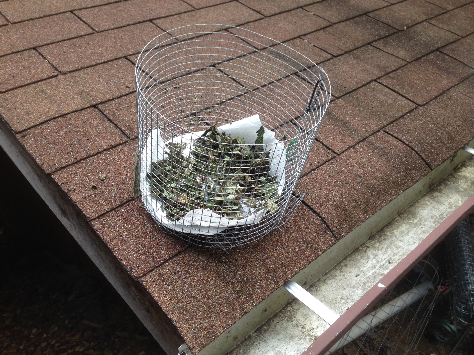 SUN DRYING HERBS IS EASY: We just tossed some into a homemade mesh basket and sat this lemon balm on a low-roof top and it dried within a few hours. #GardensAll #SunDriedHerbs #DryingFood #HowToDryHerbs #BestWaysToDryFood #FoodDrying