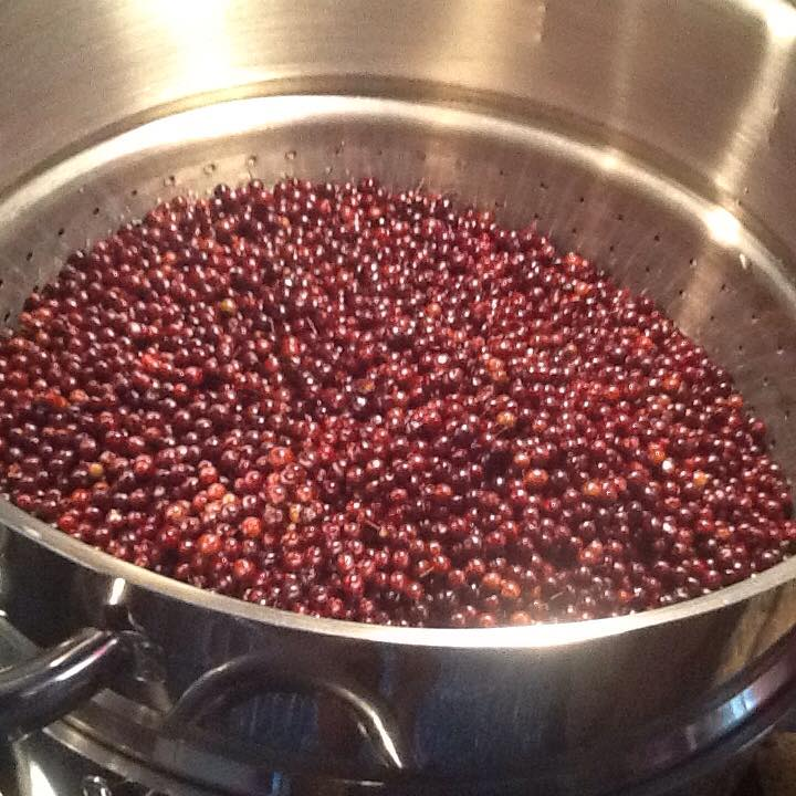 harvested elderberries