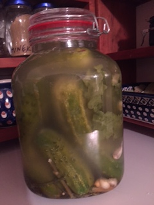 Fermented Cucumbers are easy to make and contain healthy probiotics great for gut health and immunity. #FermentedCucumbers #RefrigeratorPickles #EasyHomemadeDillPickles #FastPickleRecipe #DIYPickles #DillPicklesRecipes