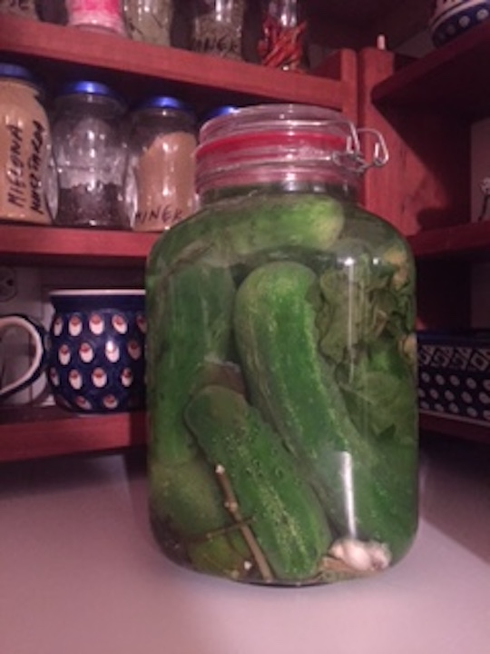 See this fermented cucumbers recipe for dill pickles with probiotics. Simple to make then leave to ferment for 6 days. Fermented Cucumbers are easy to make and contain healthy probiotics great for gut health and immunity. #FermentedCucumbers #QuickCanningCucumbers #EasyHomemadeDillPickles #DIYPickles #DillPicklesRecipes