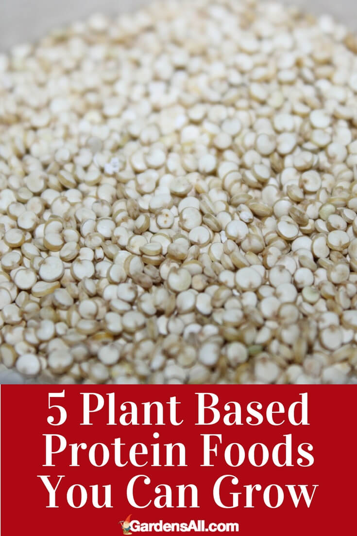 5 HIGH PROTEIN PLANTS TO GROW