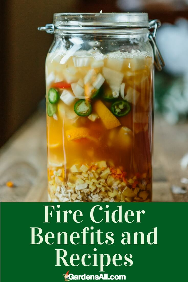 Fire cider is made with an apple derivative of reported medicinal benefit: apple cider vinegar. We're not taking it daily, preferring to eat nutrient rich foods daily while saving things like fire cider and immunity teas it for when our body needs a real immunity boosting kick in the pants, but some folks do take daily doses.