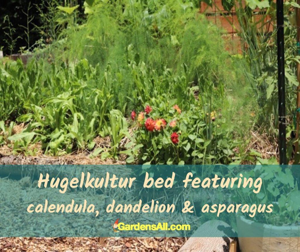 Hugelkultur raised garden bed. #Hugelkultur #RaisedGardenBed #Calendula #Asparagus #Dandelion #FallGarden #RaisedBed
