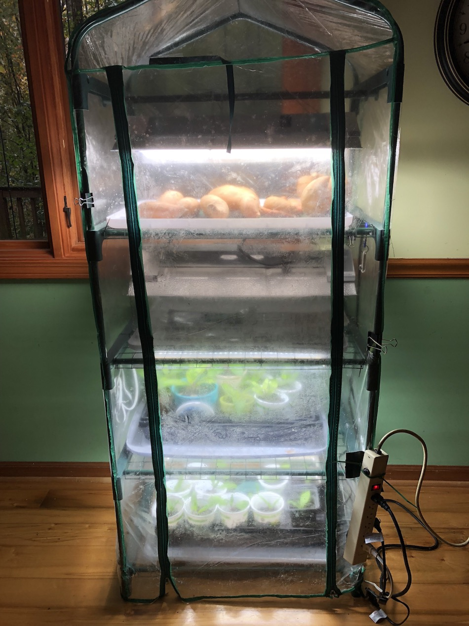 indoor greenhouse, LED grow lights