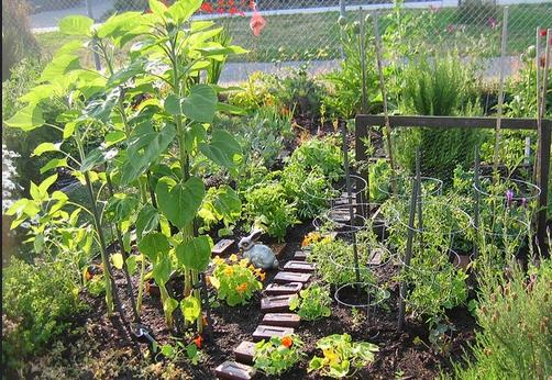 PROTEIN PLANTS TO GROW - Protein garden