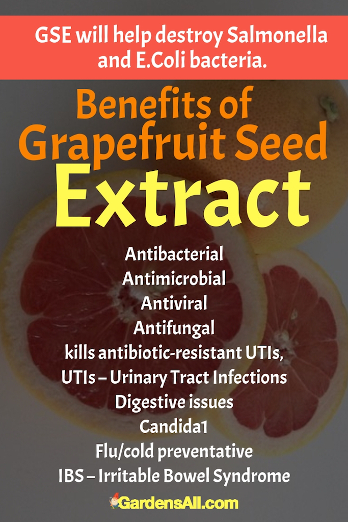 Grapefruit seed extract kills all kinds of infectious microbes—bacterial, viral, and fungal. GSE kills antibiotic-resistant UTIs, remedies fungal infections, relieves athletes foot and nail fungus, and treats digestive disturbances associated with.  #Grapefruit #GrapefruitSeed #GrapefruitBenefits #HealthBenefits #Recipes #Homemade #Fruits #Fruit #Remedies #ToGrow #ForPain #HowToMake #Tips #Flu
