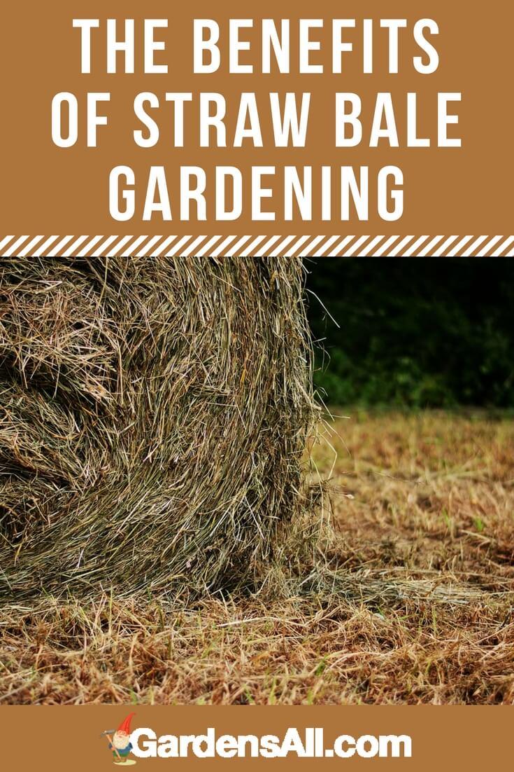 Benefits of Straw Bale Gardening, Hacks and How-to | GardensAll