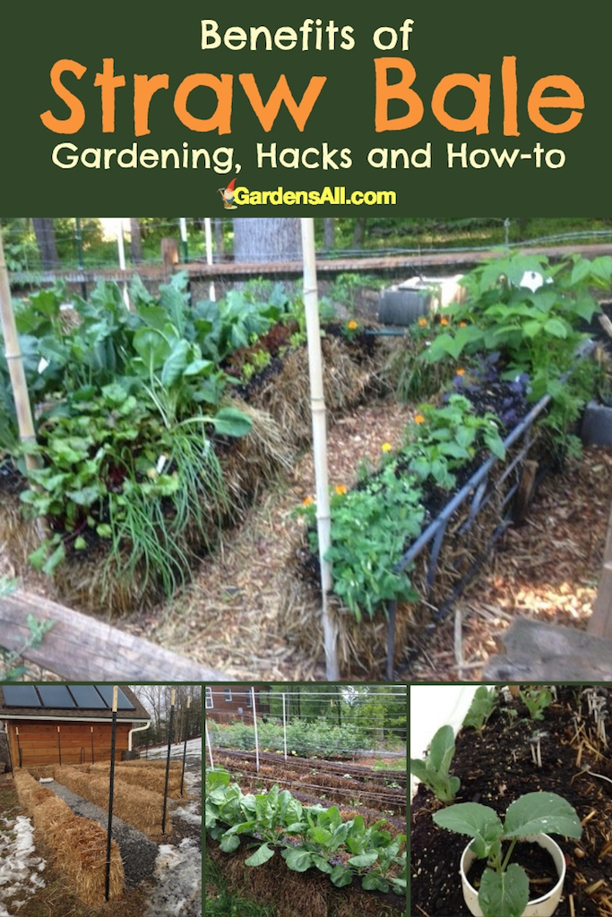 Of the many benefits of straw bale gardening, one of the most popular is the back-savingeasier access.  Some folks love it, others diss it. We tried it this year for ourselves and our 81-year-old mother/mother-in-law who's thrilled to have easier access to tending garden plants. #Gardening #StrawBale #Conditioning #Layout #How #Flowers #Vegetables #Design #Problems #Ideas #Tips #Strawberries #Frame #Plants #Trellis #Herbs #Tomatoes #DIY