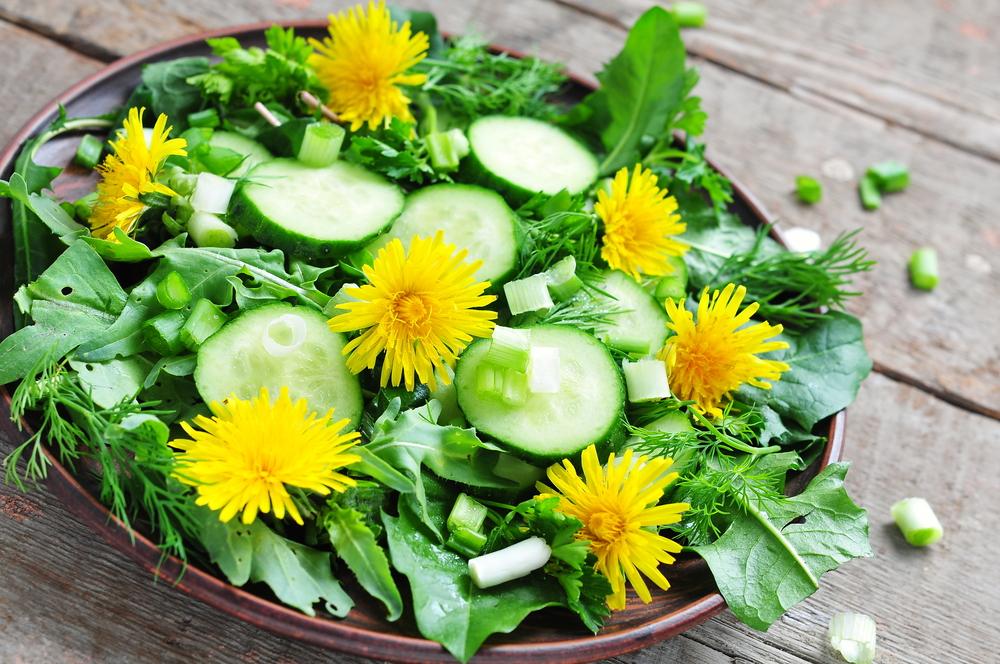 Dandelion-salad | GardensAll
