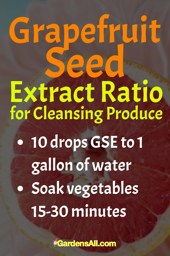 The solution can be used again, but I only use it about 3 times before making fresh. Don't rinse your produce after soaking. Lay it out on the counter on top of a thick towel and let the moisture evaporate, then store in the refrigerator as usual. #Grapefruit #GrapefruitSeed #GrapefruitBenefits #HealthBenefits #Recipes #Homemade #Fruits #Fruit #Remedies #ToGrow #ForPain #HowToMake #Tips #Flu