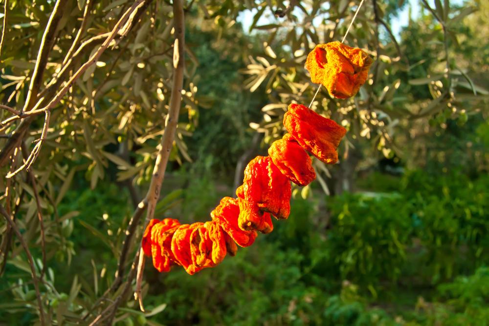 SUN DRIED FOOD: Line dried, sun dried bell pepper on a string. #SunDried #SunDriedFood #SunDriedPeppers #SunDriedBellPeppers