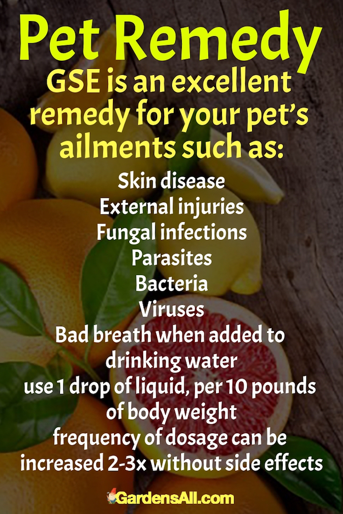 GSE is extremely potent, so be sure to use safely diluted ratios and follow product or health professional's dosage instructions. #Grapefruit #GrapefruitSeed #GrapefruitBenefits #HealthBenefits #Recipes #Homemade #Fruits #Fruit #Remedies #ToGrow #ForPain #HowToMake #Tips #Flu