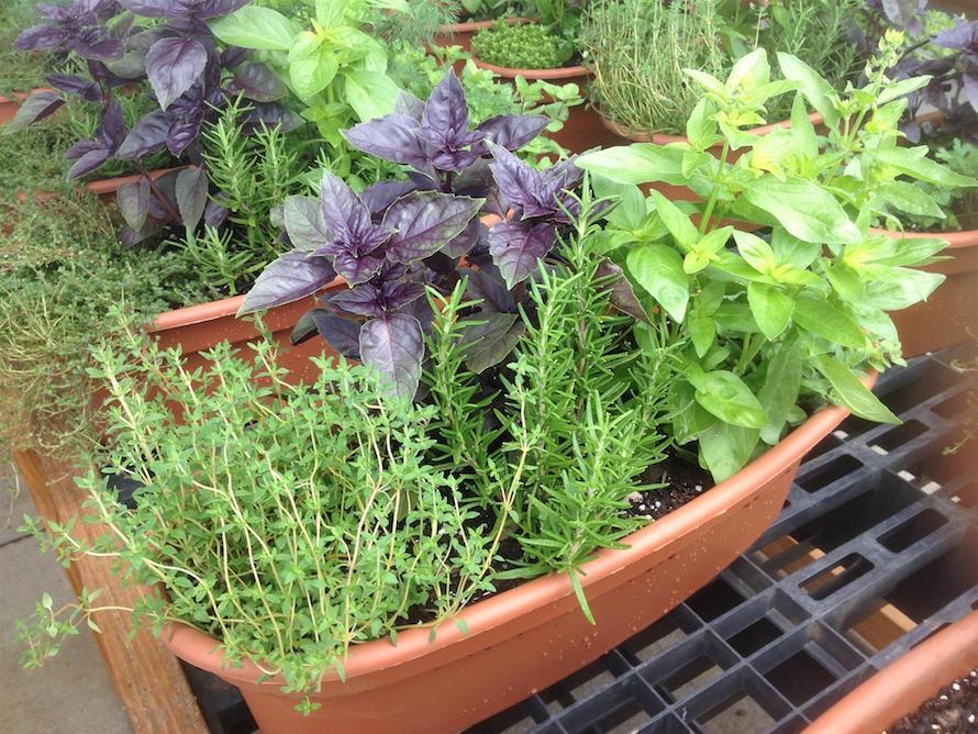 herb dish garden