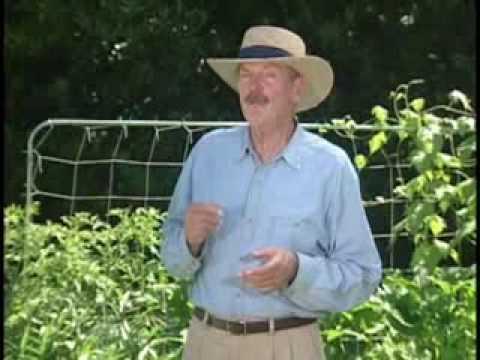 square foot gardening, grid garden