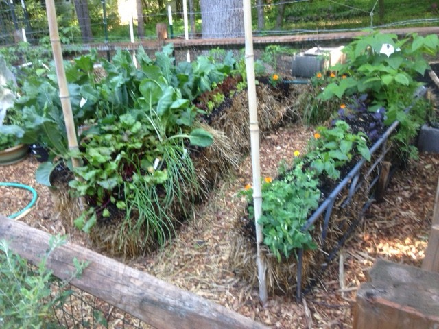 Straw bale gardening method or raised beds. #StrawBaleGardening #StrawBale #RaisedBedGarden